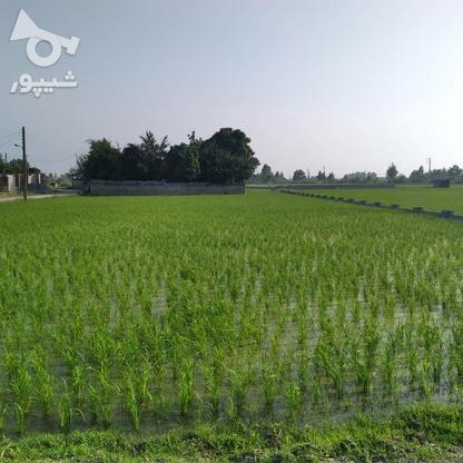 فروش زمین مسکونی 7000 متر در فریدونکنار در گروه خرید و فروش املاک در مازندران در شیپور-عکس2