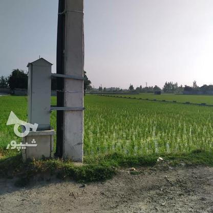 فروش زمین مسکونی 7000 متر در فریدونکنار در گروه خرید و فروش املاک در مازندران در شیپور-عکس1