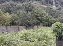 فروش زمین مسکونی 320 متر در چالوس در شیپور-عکس کوچک