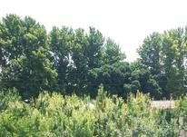 زمین کشاورزی 160 متر  در شیپور-عکس کوچک