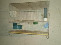 12 عدد قفس قناری ویک عدد جوجه پران در شیپور-عکس کوچک
