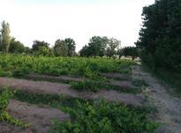 فروش باغ و زمین کشاورزی در شیپور-عکس کوچک