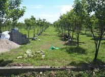 باغ خرمالو قطعه ریز با شرایط عالی در شیپور-عکس کوچک