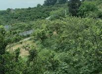 فروش زمین مسکونی 470 متر درجنظامینوکلا در شیپور-عکس کوچک