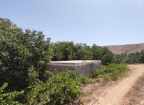 1000متر باغ گردو واقع در سریوان تپه حاشیه جاده در شیپور-عکس کوچک