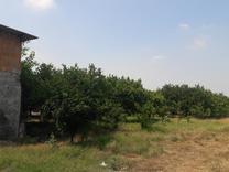 فروش زمین کشاورزی 350 متر در جاده فرح آباد در شیپور