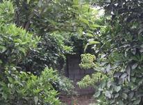 باغچه 850 متر در سورک در شیپور-عکس کوچک