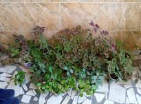 گل های طبیعی در شیپور-عکس کوچک
