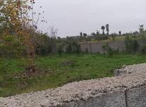 فروش زمین مسکونی 1000 متر در رضوانشهر در شیپور-عکس کوچک