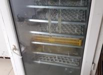 دستگاه جوجه کشی 588تایی در شیپور-عکس کوچک