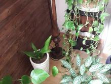4 عدد گل باهم فروشی در شیپور