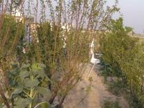 فروش و معاوضه زمین کشاورزی 510 متر در نظرآباد کوچک در شیپور
