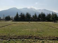 فروش زمین 320 متر در کلاردشت شهرکی  در شیپور-عکس کوچک