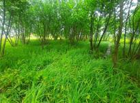 زمین مسکونی 300 مترشکل مستطیلی در شیپور-عکس کوچک