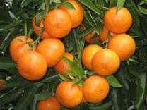 فروش باغ 22000 متر در جاده گلما در شیپور