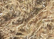 کاه گندم وجو در شیپور-عکس کوچک