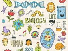 مدرس زیست شناسی در شیپور