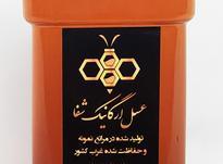 عسل طبیعی آفتابگردان در شیپور-عکس کوچک