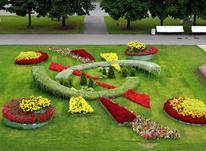باغبانی انجام میشود در شیپور-عکس کوچک