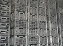 سبد 10 کیلویی در شیپور-عکس کوچک