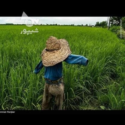 زمین کشاورزی 7500 متر مربع شهرک عباس آباد در گروه خرید و فروش املاک در گیلان در شیپور-عکس1