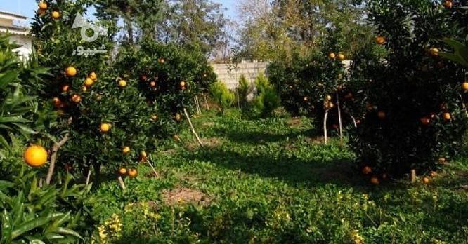 فروش زمین باغ260 متر  در گروه خرید و فروش املاک در مازندران در شیپور-عکس7