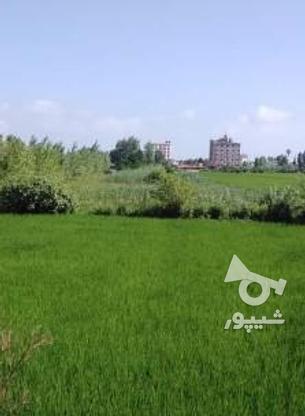 زمین 206 متری محمودآباد بافت مسکونی در گروه خرید و فروش املاک در مازندران در شیپور-عکس1