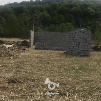 فروش 300 متر زمین پلاک 2 جنگل در گروه خرید و فروش املاک در مازندران در شیپور-عکس2