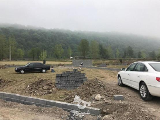 فروش 300 متر زمین پلاک 2 جنگل در گروه خرید و فروش املاک در مازندران در شیپور-عکس5