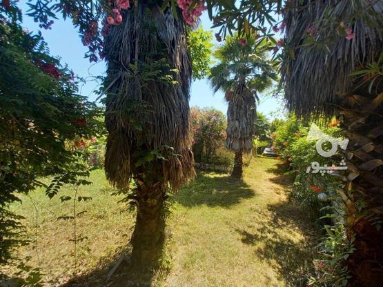 فروش ویلا باغ 580 متری رویان بنجکول در گروه خرید و فروش املاک در مازندران در شیپور-عکس2