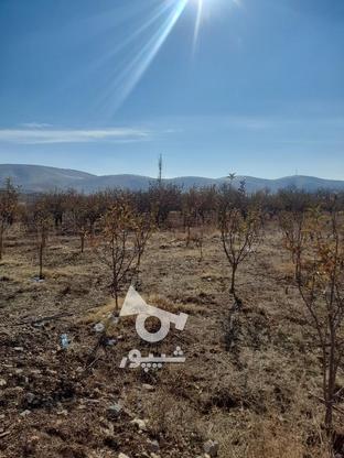 فروش زمین1000 متر در ابسرد در گروه خرید و فروش املاک در تهران در شیپور-عکس6