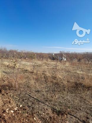 فروش زمین1000 متر در ابسرد در گروه خرید و فروش املاک در تهران در شیپور-عکس1