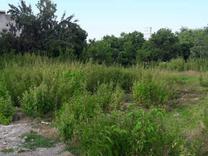 فروش زمین بافت کامل 160 متری منطقه امل در شیپور