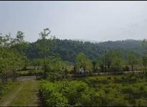 فروش زمین مسکونی 1141 متر باچشم انداز عالی در سیاهکل در شیپور-عکس کوچک