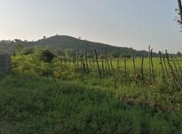 زمین مسکونی 300 متر در منطقه توریستی لیش در شیپور-عکس کوچک