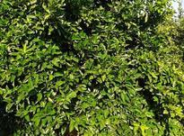 فروش باغ بسیار زیبا دور دیوار به متراژ 1150متر در شیپور-عکس کوچک
