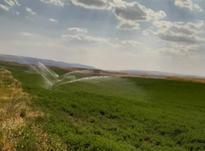 زمین کشاورزی یونجه در شیپور-عکس کوچک