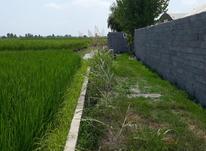 فروش زمین کشاورزی 2000 متر در محموداباد در شیپور-عکس کوچک