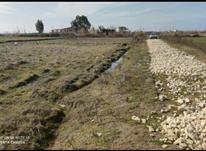 فروش زمین کشاورزی 1000 متر در بهنمیر در شیپور-عکس کوچک