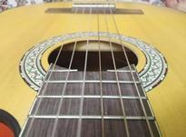 فروش گیتار pao chio پیکاب خور بدون لک در شیپور-عکس کوچک