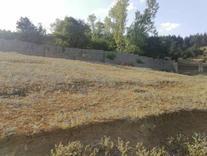 فروش زمین کشاورزی 3000 متر در کلاردشت در شیپور