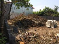 فروش زمین مسکونی 200 متر در سیاهکل در شیپور-عکس کوچک
