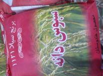 برنج هندی وپاکستانی در شیپور-عکس کوچک