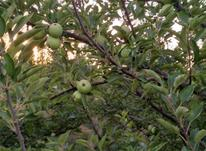 فروش باغ سیب در شیپور-عکس کوچک
