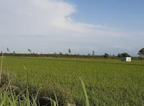 11000 زمین کشاورزی در شیپور-عکس کوچک