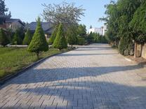 فروش زمین مسکونی 290 متر در رویان / سیاهرود /چای باغ در شیپور