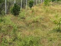 فروش زمین باغی 4000 متری با درختان میوه در شیپور