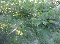باغ دارای چاه پروانه دار در شیپور-عکس کوچک