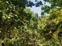 600متر باغ سند دار در شیپور
