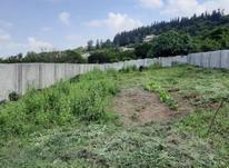 فروش زمین مسکونی 700 متری در تنگه لته در شیپور-عکس کوچک